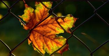 Bricodeco blog bricolage et d coration - Cloturer son jardin ...
