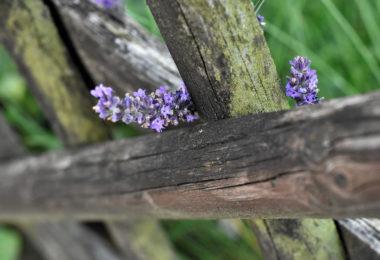 Cloture en bois